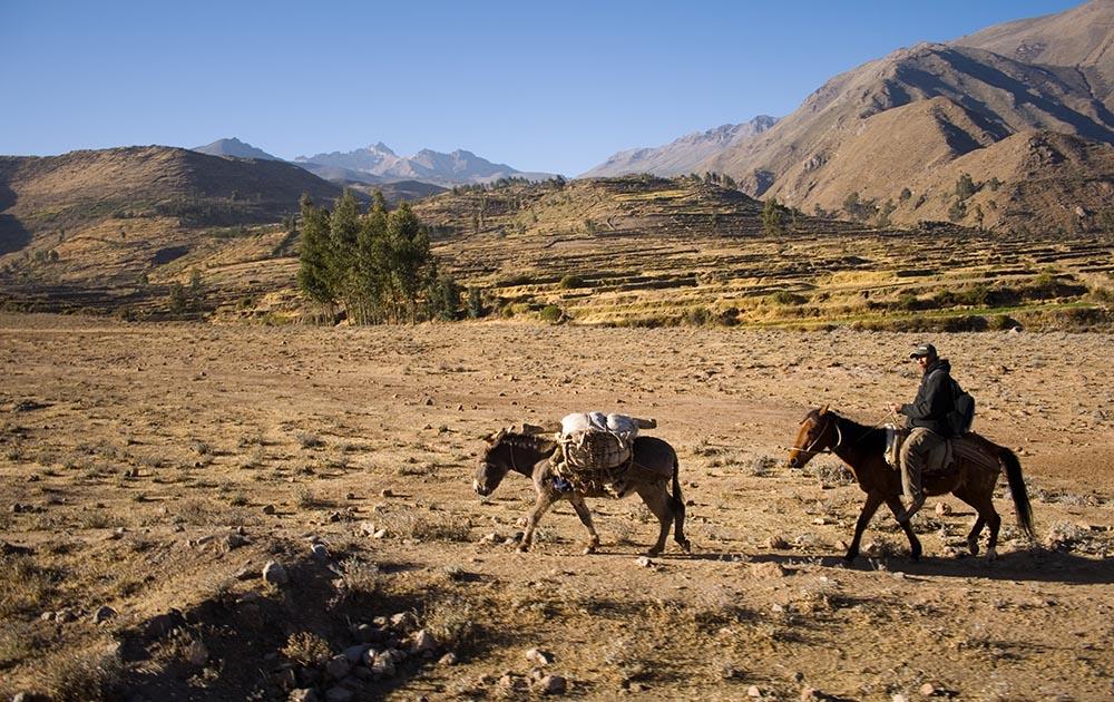 Agriculteur avec ses ânes, avant la descente dans le canyon de Colca