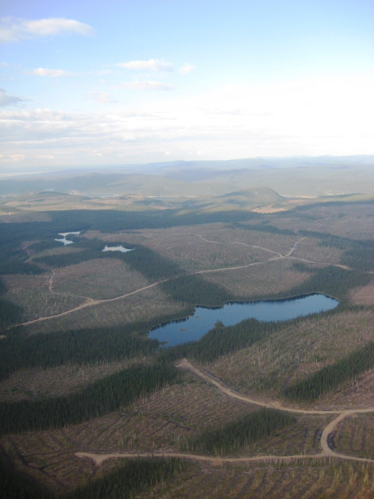 Aperçu des coupes effectuées par Kruger sur l'île René-Levasseur. (Source: Wikipédia)