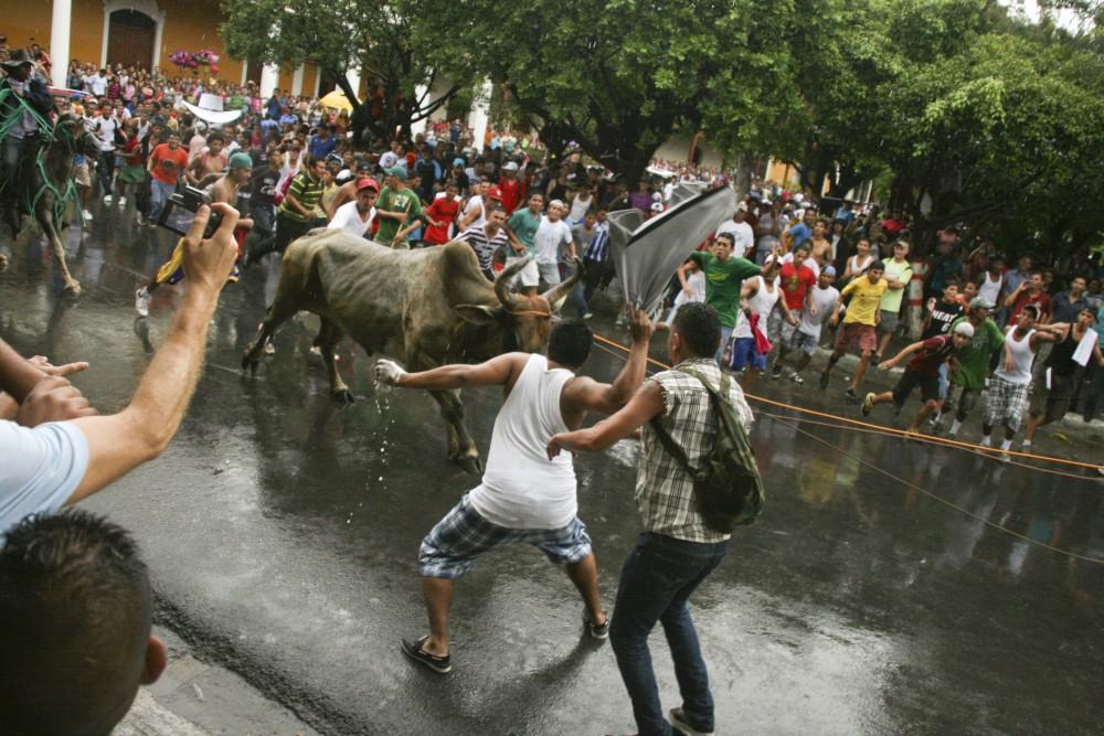 Les taureaux chargent!